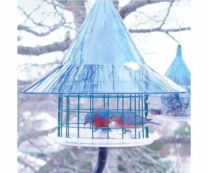 Bluebird Feeders by Arundale