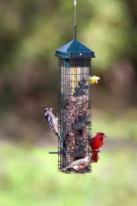 Wire Caged Feeders by Brome Bird Care