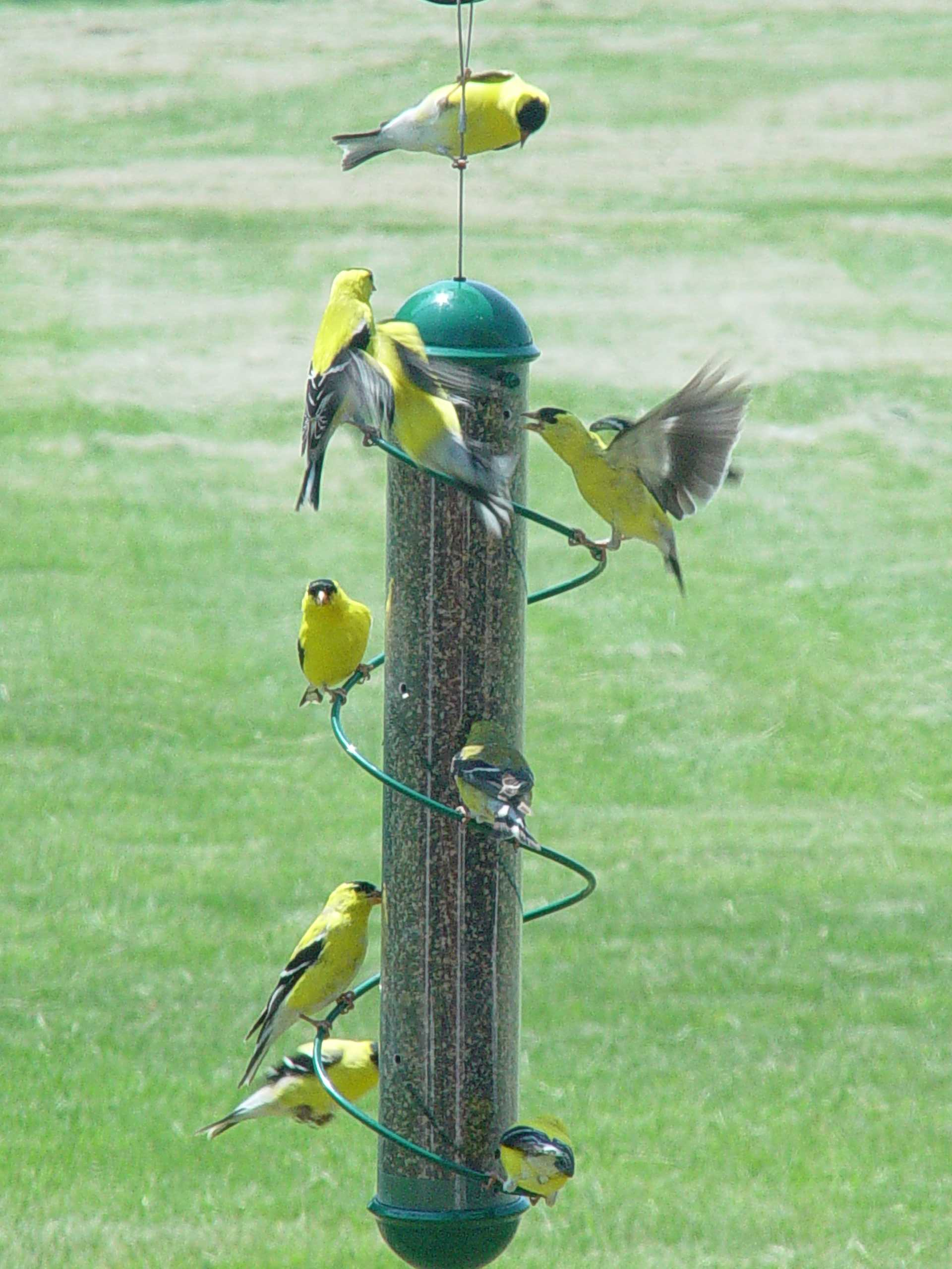 bird bch by finch feeders shop nyjer birding page feeder wild quart forever yellow