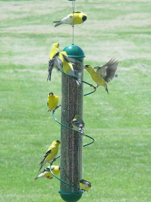 "Songbird Essentials 17"" Green Spiral Finch Tube Bird Feeder"