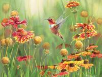Outset Media Games Rufous Hummingbird 500 piece Puzzle