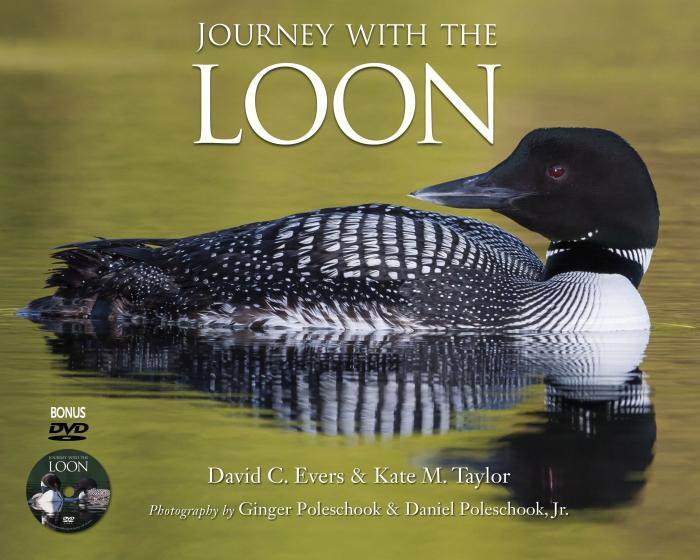 Willow Creek Press Journey with the Loon - DVD Included