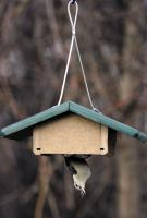 Birds Choice Recycled Single Cake Upside Down Suet Bird Feeder with Hanging Cable