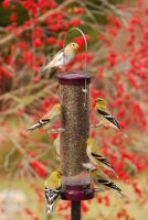 Aspects Small Nyjer Tube Bird Feeder, Berry