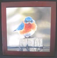 Eklund's Ltd. Mad Bluebird, Trivet