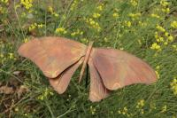 Ancient Graffiti Butterfly Staked Flamed Copper