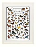Steven M. Lewers & Associates Common Butterflies of Midwest Poster