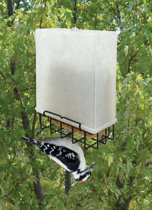 Songbird Essentials Suet Saver Bird Feeder
