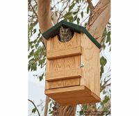 Songbird Essentials Screech Owl House