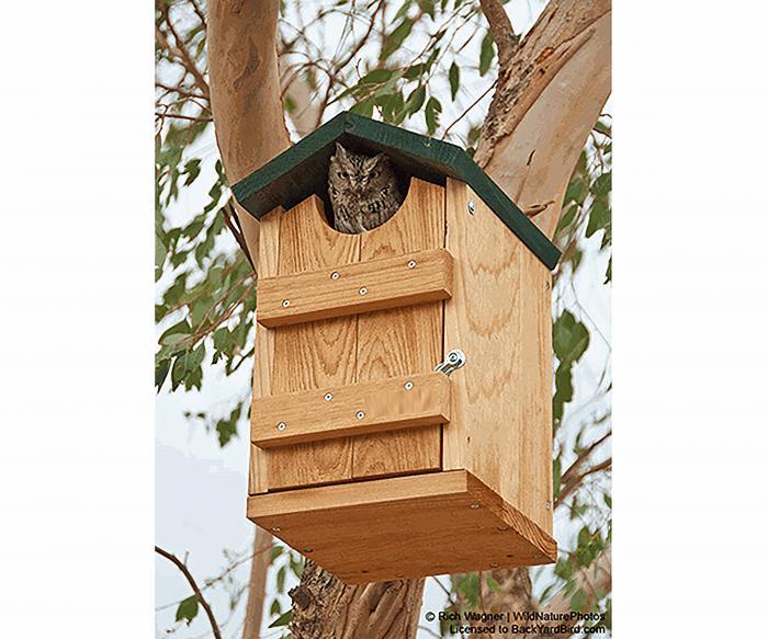 Songbird Essentials Screech Owl House