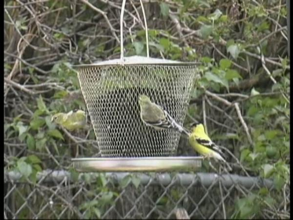 No-No Tray Bird Feeder