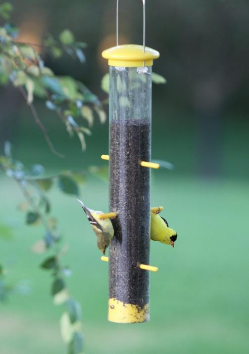Woodlink audubon series tails up plastic finch tube bird for Plastic bird feeders
