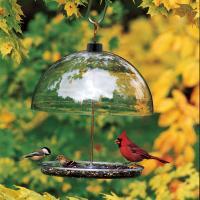 Droll Yankees Dorothy's Carindal Bird Feeder