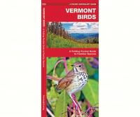 Waterford Vermont Birds