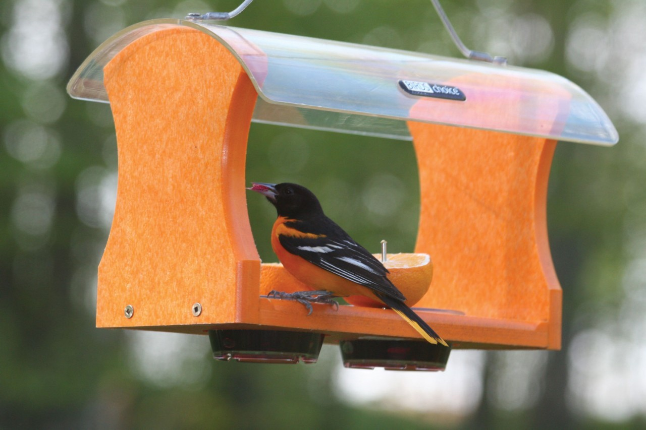 of oriole photo x jelly deluxe feeder lovely grape best
