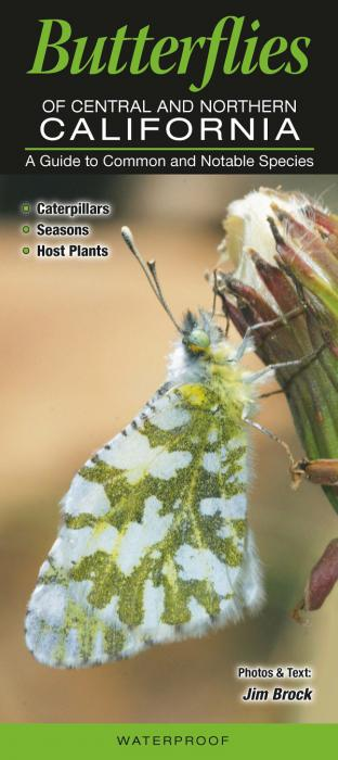 Quick Reference Publishing Butterflies of Central & Northern California