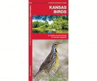 Waterford Kansas Birds