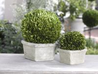 Zodax Single Ball Boxwood Topiary in Square Pot