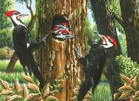 Outset Media Games Pileated Woodpeckers 1000 piece Puzzle