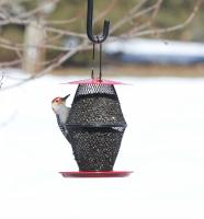 No/No Feeder Red Lantern with Tray Feeder