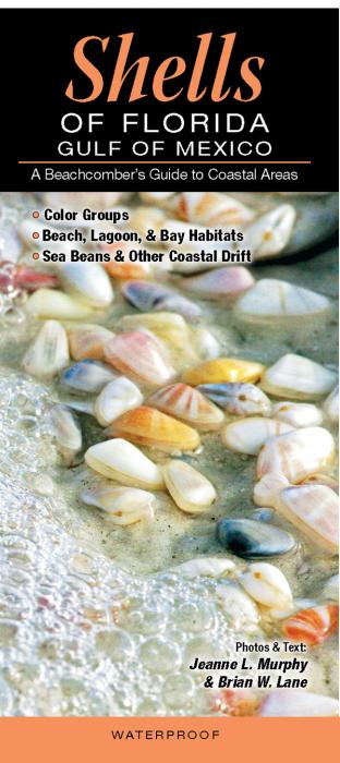 Quick Reference Publishing Shells of Florida:Gulf of Mexico