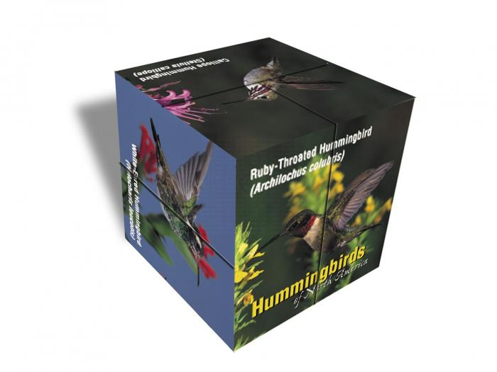 Impact Photographics Photo Cube HumBird North America