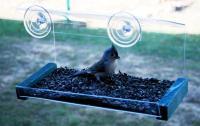 Songbird Essentials Greenhouse Window Bird Feeder