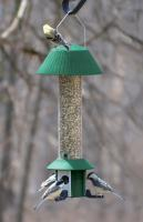 Songbird Essentials Squirrel Defeater Nyjer Feeder