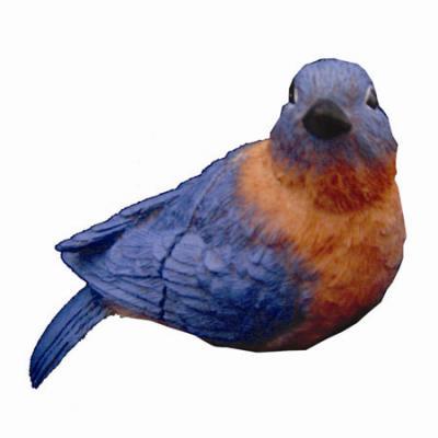 The Clark Collection Eastern Blue Bird