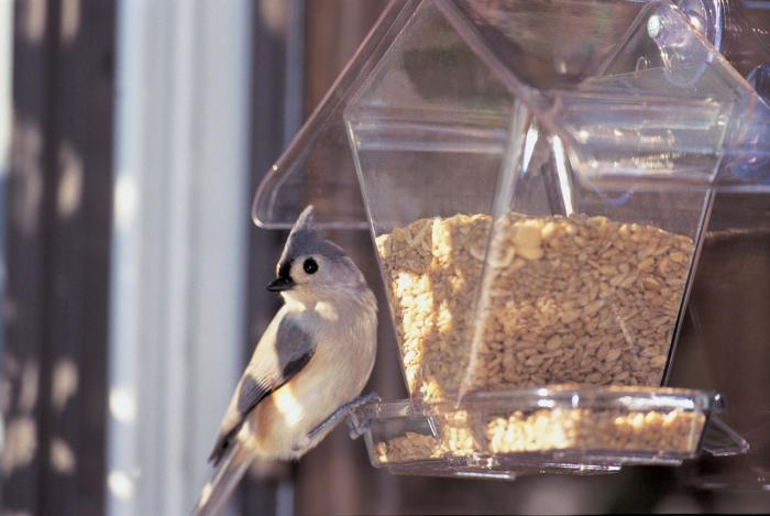 Aspects Cafe Window Bird Feeder