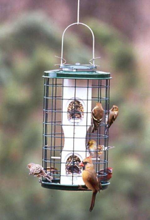 Varicraft 2 Quart Wild Bird Mixed Seed Bird Feeder with Cage