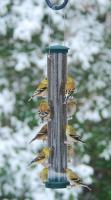Aspects Quick-Clean Nyjer Large Tubular Bird Feeder