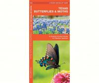 Waterford Texas Butterflies & Moths