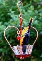 Songbird Essentials Love Birds Jelly Oriole Bird Feeder
