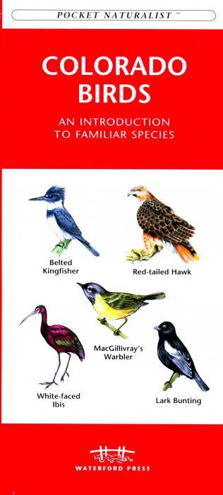 Waterford Colorado Birds