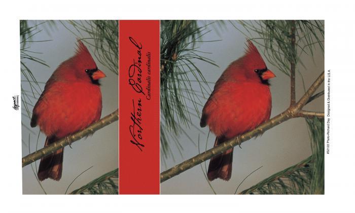 Impact Photographics Mug 14 oz Northern Cardinal