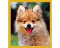 Magnetic Bookmark Pomeranian Puppy