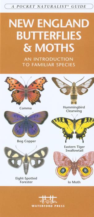 Waterford New England Butterflies & Moths