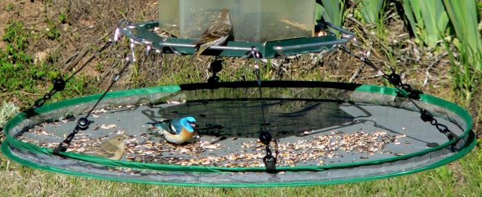 "Songbird Essentials 30"" Seed Hoop for Bird Feeder"