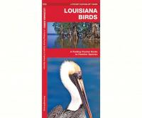 Waterford Louisiana Birds
