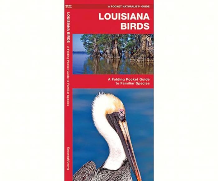 Waterford Louisiana Birds