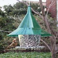 Arudale Emerald Sky Cafe Bird Feeder