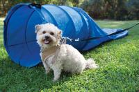 Pacific Play Tents 90001 Dog Chute - 8Ft Chute And 3Ft X 24In Tunnel - Blue