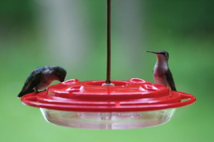 Birds Choice 8 Ounce Hummerfest Hummingbird Bird Feeder