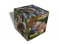 Impact Photographics Photo Cube Owls North America