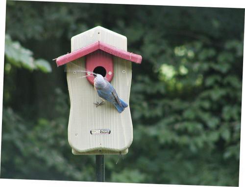 Birds Choice Bluebird House with Viewing Window