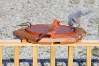Songbird Essentials SE501 Cedar Heated Deck BirdBath
