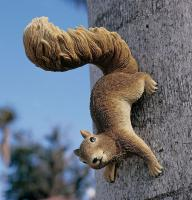 Design Toscano Simone Hanging Squirrel Statue