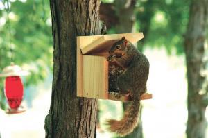Squirrel Houses & Feeders by Woodlink Audubon Series