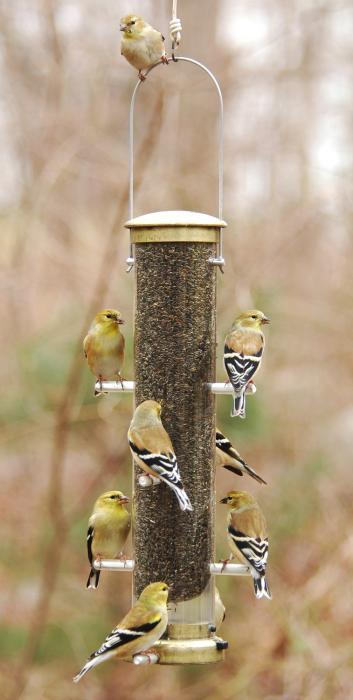 Aspects Antique Brass Medium Thistle Tube Bird Feeder w/ Quick Clean Base